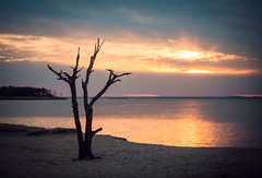 lonely (Jen MacNeill) Tags: assateague tree lone park nationalpark sunset bay water