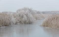 Frozen lake (Elisa1880) Tags: landgoed ockenburgh den haag the hague solleveld nederland netherlands frost rijp ijs ice winter lake meer meertje bevroren frozen