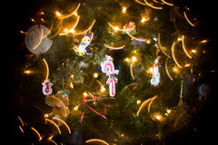 Moon lights (giantmike) Tags: christmas diy decorations ornamentss preparations wedding xmas lights tree