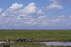 IMGP7649b (Micano2008) Tags: kenia africa amboseli parquenacional pentax aves grullacoronadacuelligris balearicaregulorum