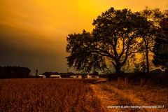 A Path Beneath The Live Oak (T i s d a l e) Tags: tisdale thepathbeneaththeliveoak soybeans liveoak path farm field fall autumn november2016 easternnc