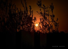 Adiós ... (Hazem Hafez) Tags: sun sunset village trees orange fayoum egypt mood clearskies