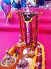 IMG_20161211_151224 (bhagwathi hariharan) Tags: rangoli kolam nallasopara nalasopara rose pooja christmas 2016 festivals mumbai goregaon prithvilandproject 2017 celebrations lordshani lordayyappa