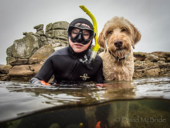 2017 Kian Fern Camel 3 (davidmcbridephotography) Tags: red labradoodle dog snorkeller swimmer camel spilt shot sea united kingdom cornwal isles scilly scillies boy wetsuit seaweed exhilerating cold freezing loade porthellick beach adventure granite awesome fun moment son pooch clear sharp nikon nauticam zen good mood happy times half term best freind pal together buddies wet water split