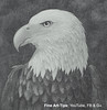 Bald Eagle Head, How to Draw - Narrated