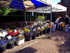 Flower stall, Tring Market (Snapshooter46) Tags: flowers tring highstreet flowerstall openair marketday flowerseller photosketch
