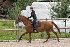 DSC06257_s (AndiP66) Tags: horse schweiz switzerland sony luzern september alpha concours pferd ch horsejumping wettbewerb springen 2015 f456 sursee sonyalpha springreiten kantonluzern cantonlucerne menznau andreaspeters ruswil buholz pferdespringen sony70400mm 77m2 vereinsspringen sal70400g2 sony70400mmf456gssmii a77ii ilca77m2 77ii 77markii slta77ii