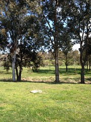 Morning golfers pass in our new backyard view (spelio) Tags: travel australia email act ipad australiancapitalterritory 2015