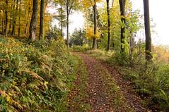 Waldweg I - forest track I