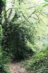 a leafy passage (my little red suitcase) Tags: autumn woods leafy pathway