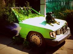Mercedes se fue a la guerra (Felipe Smides) Tags: auto mercedes mural selva guerra perro bosque mercedesbenz pintura pájaro huerta smides felipesmides lakazuela