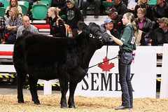 RAWF15 JSteadman 0099 (RoyalPhotographyTeam) Tags: sun royal 2015 rawf nov08