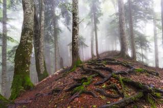 Foggy noon in National park Sutjeska