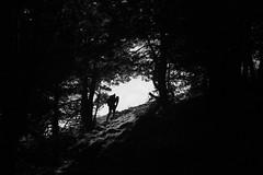 Mendi (Fermin Pagola) Tags: monte navarra pirineo mendi nafarroa barrancodeberroeta