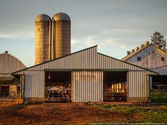 samsebeskazal.livejournal.com-04989.jpg (samsebeskazal) Tags: unitedstates pennsylvania farm amish lancaster lancastercounty buggy pennsylvaniadutch birdinhand