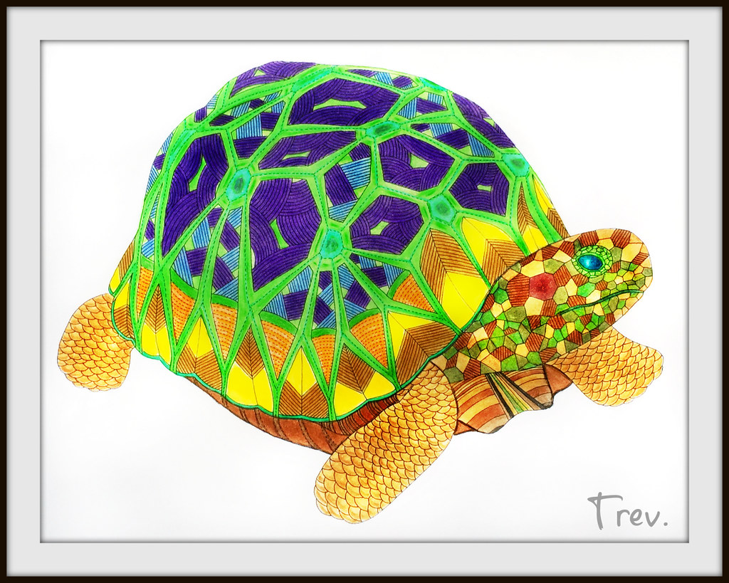 Tommy The Tortoise Trev Grant Tags Colouring Animalkingdom Colouringbook 2015 Colouredpencils Milliemarotta