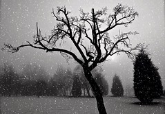 (plot19) Tags: show xmas winter blackandwhite moon black tree landscape manchester happy photography blackwhite nikon northwest north northern plot19