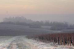 Thésée-la-Romaine (Loir-et-Cher) (sybarite48) Tags: théséelaromaine loiretcher france brume nebel mist ضب 薄雾 niebla ομίχλη nebbia ミスト mgła névoa туман sis geléeblanchehoarfrostraureifالصقيع المتجم白霜escarchaπαγετόσbrina霜szrongeadaморозинейkırağı vigne vine weinstock كرمة 藤 vid αμπέλου vite つる wijnstok winorośl videira винограднаялоза asma sentier chemin pfad path trail المسار 路径 sendero μονοπάτι sentiero cammino パス トレイル spoor szlak ścieżka trilha rastro тропа след трейл iz rotası