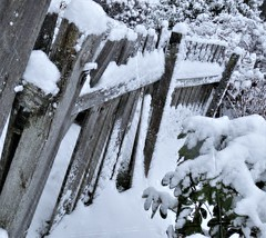 Snow on fence. (France-♥) Tags: 9 snow hiver winter neige cloture fence bc vancouver canada wood 2013 white cold blanc froid