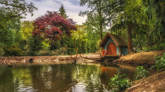 The Pond ( In Explore) (Einir Wyn) Tags: landscape light leaf leaves love water pond trees colour color sky duck outdoor tranquil nikon nature natural reflection clouds countrylife house building home wales uk britain green orange red plants foliage fishing forest