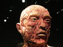 The face (Lorenzo Bl) Tags: lorenzo blangiardi lydser body world words anatomy anatomia amsterdam van gogh face love sax music gunther von hagens plastination
