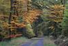 Arnsberger Wald - Herbst (Michael.Kemper) Tags: canon eos 6d canoneos6d ef 70200 f4 l usm canonef70200f4lusm deutschland germany nrw nordrheinwestfalen northrhinewestphalia westphalia neheimhüsten neheim hüsten huesten alter holzweg alterholzweg herbst autumn fall herbstfarben foliage colours colors laub herbstlaub arnsberg arnsberger wald forest baum bäume tree trees ruhe stille silence calm calmness ruhig still
