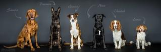 Dogfamily.