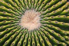 Jardin de Cactus - Lanzarote (Lark Ascending) Tags: cactus succulent ridges barrel green soines prick prickly undulating lanzarote canaryislands spain guatiza