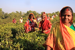 C1_2016-161397 (HamimCHOWDHURY  [Read my profile before you fol) Tags: teagardenportrait girlnature tealeaf workingwomen