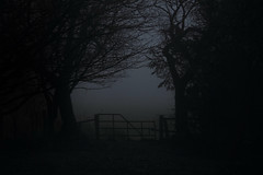 Dreich (Pog's pix) Tags: dreich monochrome desaturated misty mist garden gate trees silhouttes dark moody damp wet stewarton ayrshire scotland eastayrshire weather outdoor outdoors outside