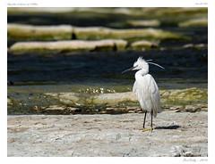 Sur les bords de l'Allier (BerColly) Tags: france auvergne puydedome riviere river allier oiseaux birds eau water banks bercolly google flickr