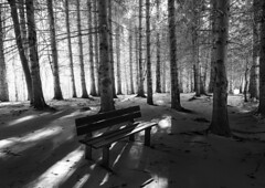 _DSC8302 (Giuseppe Cocchieri) Tags: bw blackwhite blackandwhite biancoenero bianconero foresta forest light luce trees alberi albero mountain montagna snow neve winter inverno mood atmosfera paesaggio