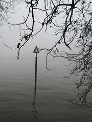 Mist on the River 1. (Capella Silverangel) Tags: misty morning mistymorning fog peasoup pea soup weather london river thames battersea power station grosvenor road bobmarley bob marley