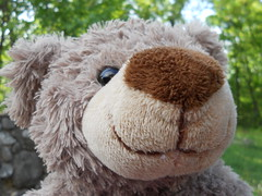 Bernie the teddy bear (mattxp) Tags: teddy bear nature green brown black nose mouth stone wall tree summer cute kawaii bernie nikon coolpix s3000