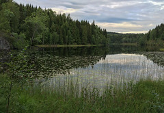 Calm Lake 2 (bjorbrei) Tags: lake green water grass oslo norway forest pond calm moan tarn tranquil maridalen movant