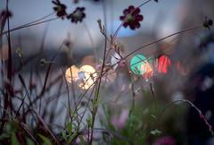 Inner city flowers (Storkholm Photography) Tags: city flowers urban trafficlights nature garden 50mm lights hotel nikon traffic sweden stockholm gardening straw depthoffield growing scandinavia dop 50mmf14 fokus d610 booked lydmar