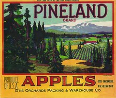 """Pineland • <a style=""""font-size:0.8em;"""" href=""""http://www.flickr.com/photos/136320455@N08/21283678330/"""" target=""""_blank"""">View on Flickr</a>"""