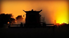 Soybean Combine Harvester at Sunset (forestforthetress) Tags: color silhouette rural work nikon outdoor farm country harvest machine combine farmer soybeans omot