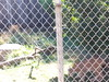 20150919_113722 (mjfmjfmjf) Tags: oregon zoo 2015 greatcatsworldpark