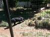 20150919_114435 (mjfmjfmjf) Tags: oregon zoo 2015 greatcatsworldpark