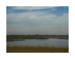 It Won't Be Long Now (Jayhawk Explorer) Tags: lake nature water lawrence ks wetlands bloom kansas douglascounty bakerwetlands mysanctuary smartphotoeditor ipiccy impactwaterscape simplewhiteborder