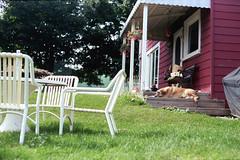 porchdog (toulouse goose) Tags: sleeping dog film farmhouse 35mm canon eos kodak furniture lawn 400 porch plus epson portra equals elan7 c41 v500 ef50mm18 porchdog