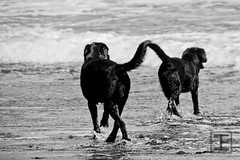 Amigos / friends (Jesus_Fernandez) Tags: ocean sea blackandwhite bw blancoynegro beach dogs animal mar play friendship playa bn perros juego amistad océano