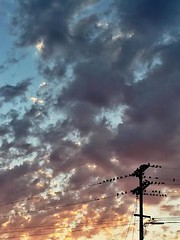 birds (andreabrouillette) Tags: family light sunset sky colors birds silhouette clouds solar daylight rainbow soft skies shadows bright dusk vibrant telephone smooth peaceful stormy calm pole goodnight lunar