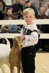 RAWF15 JSteadman 0094 (RoyalPhotographyTeam) Tags: sun cute kid royal goat 2015 rawf nov08