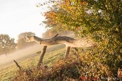 Hatfield_Forest-38 (Eldorino) Tags: park uk morning autumn trees nature forest sunrise landscape countryside nikon britain centre jour hatfield bishops stortford essex hertfordshire stanstead hatfieldforest