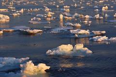 _DSC8591 (TC Yuen) Tags: glacier arctic greenland whales iceberg crusing floatingice polarregion greenlandeast