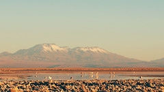 Salar de Atacama (Belen G.) Tags: chile naturaleza sony flamencos norte sanpedrodeatacama salardeatacama lagunachaxa