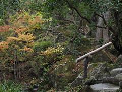 PB220917 (takafumionodera) Tags: japan olympus hakone omd em1   goura