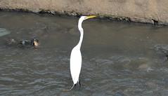 Encruzilhada (Rctk caRIOca) Tags: rio de janeiro maracan